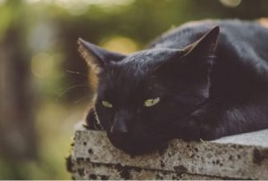 Lucky Cat πόσο κοστίζει, τιμή